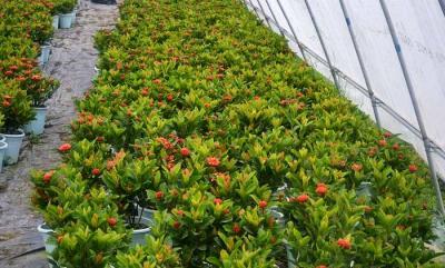 壁纸 成片种植 风景 花墙 景观 墙 植物 种植基地 桌面 400_241